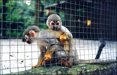 animais_presos_manaus2